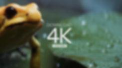 frog_scene_v02_download.jpg