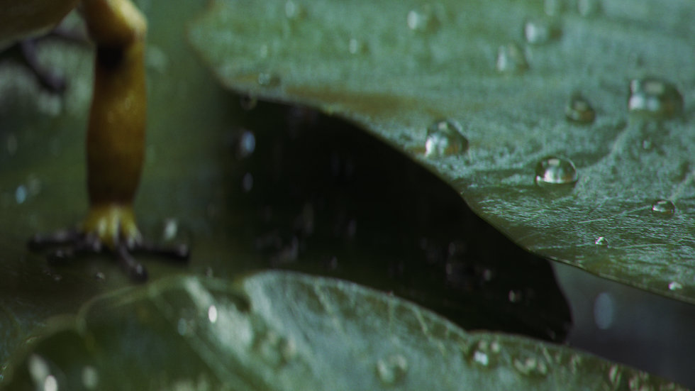 frog_scene_v02_detail_4.jpg