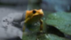 frog_scene_v02_passes.jpg