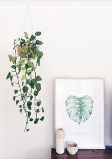 DIY hanging plant