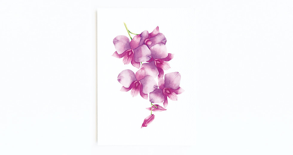 COOKTOWN ORCHID CARD