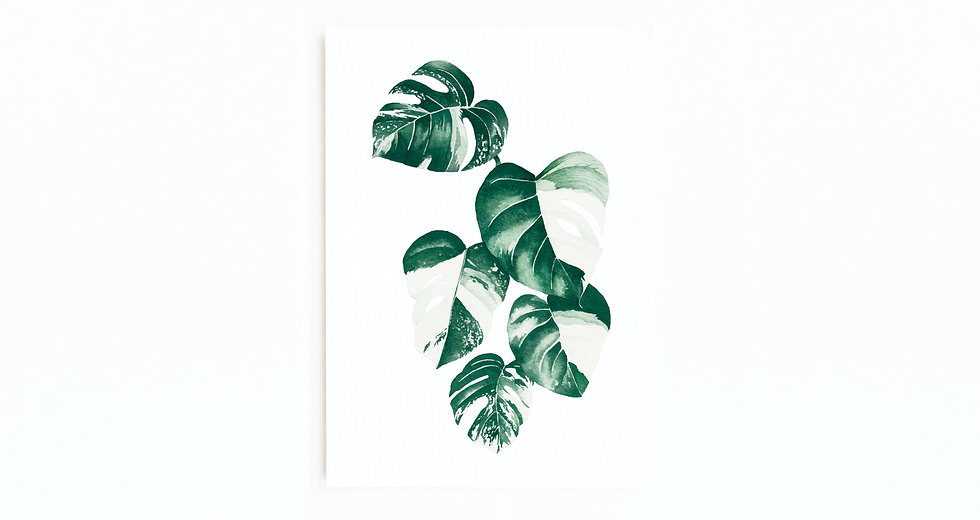 VARIEGATED MONSTERA CARD