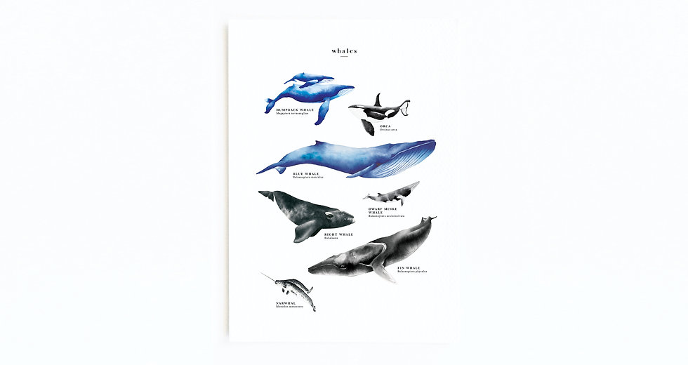 WHALE SPECIES EDUCATIONAL POSTER