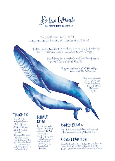 BLUE WHALE EDUCATIONAL POSTER