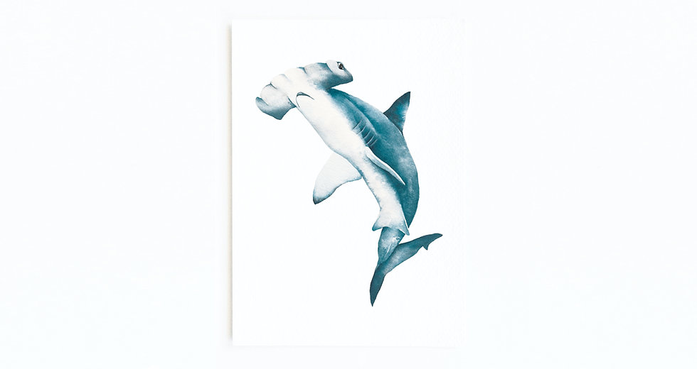 HAMMERHEAD SHARK CARD