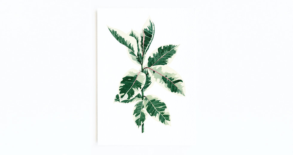 RUBBER PLANT CARD
