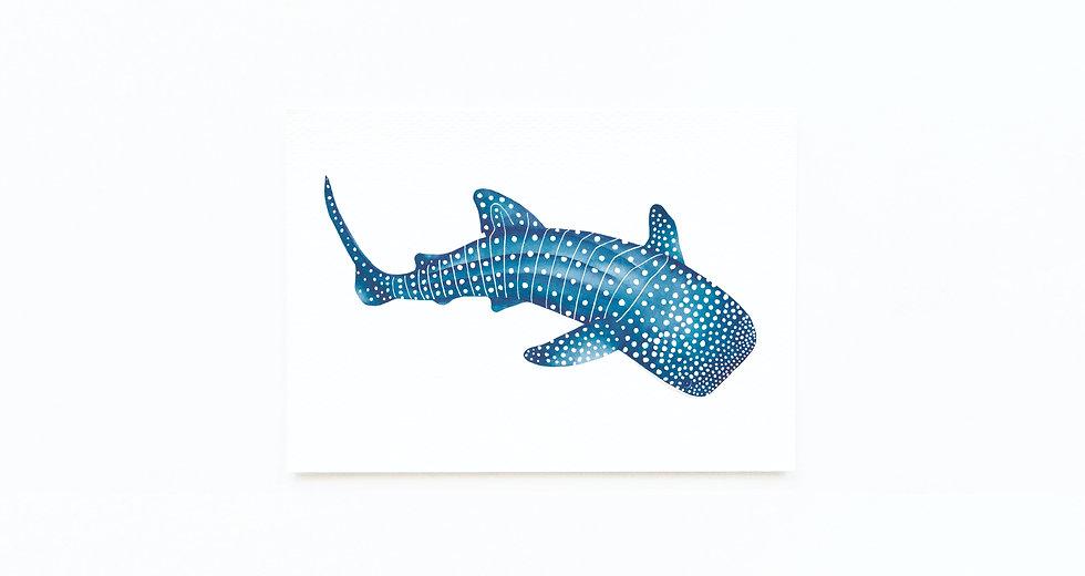 WHALE SHARK CARD