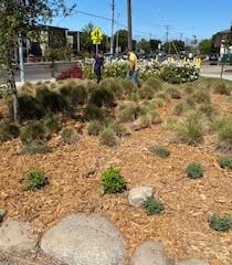Buena Vista Park 2.jpg