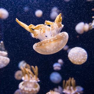 Underwater lightness