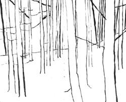 Esher Woods, Surrey