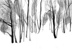 'Banstead Woods IV'