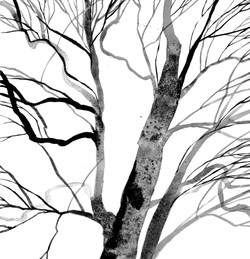 'Winter Tree, Kentmere Valley'