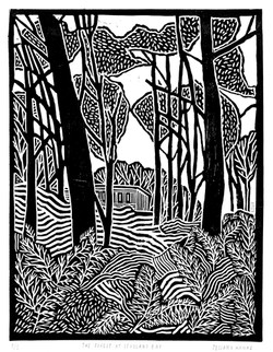 'Forest at Studland Bay'