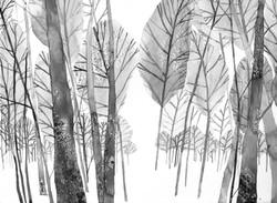 'Banstead Woods'
