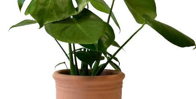 "Clay pot w/ 6"" plant & decorative snail"