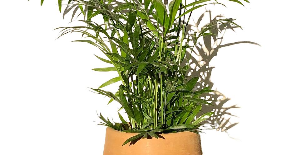 Tall Soft Terracotta Pot