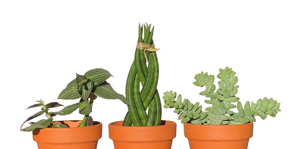 "3"" Terracotta Pots w/ Saucers (set of 3)"