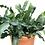 "Thumbnail: Clay pot w/ 6"" plant & decorative snail"