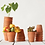 "Thumbnail: 4"" Carved Clay Pots w/ 3"" plants (set of 5)"