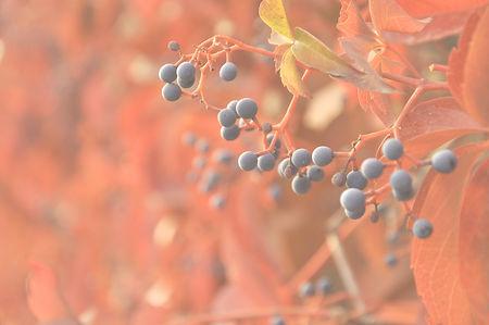Fruits in Bloom_edited_edited.jpg