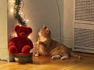 Kitty and Teddy Bear.jpg