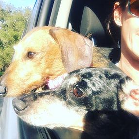 Roxy and Lulu.JPG