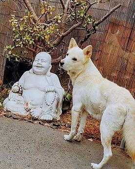Okami Buddha.jpg
