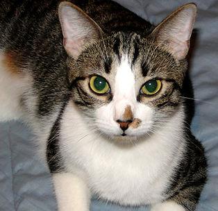 Freddie the Cat.JPG