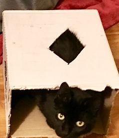 Buster in Box.jpg