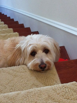 Sally on Stairs.JPG