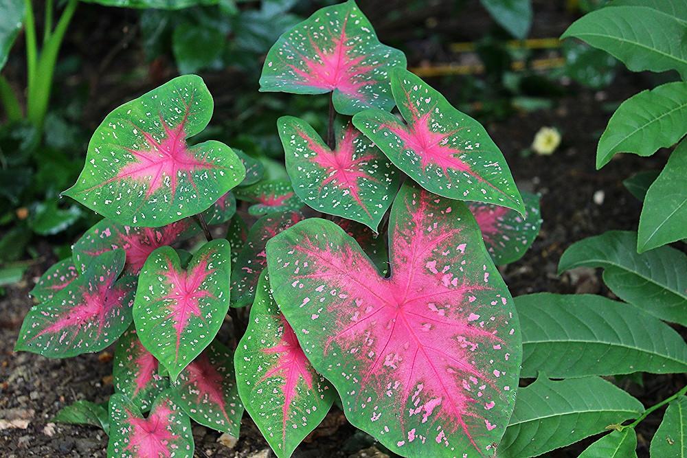 tropical plants, home garden