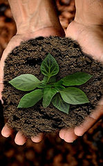 sustainable-agriculture-1_edited.jpg