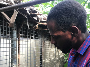 Animal Endangerment Is At An All-Time High In Nigeria