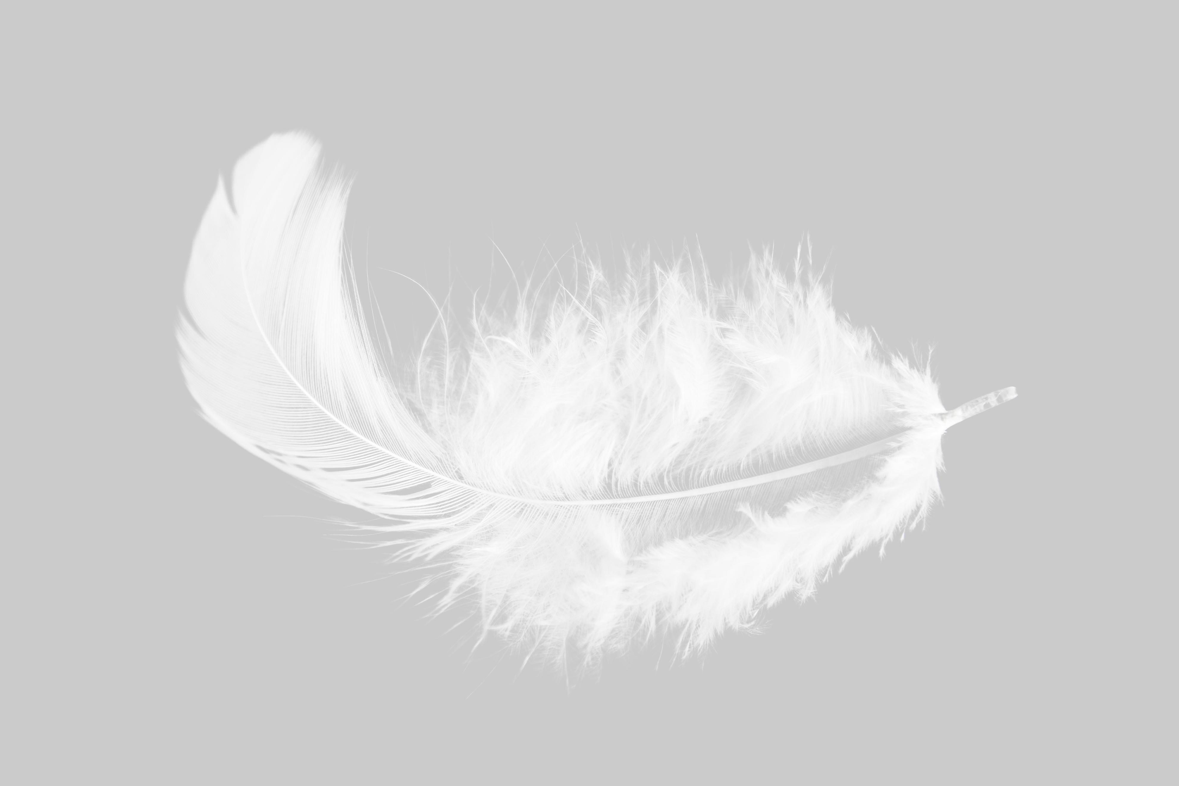 Single white feather
