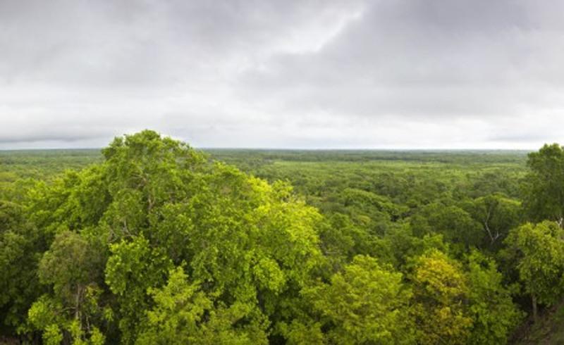 Selva-de-Yucatan.jpg