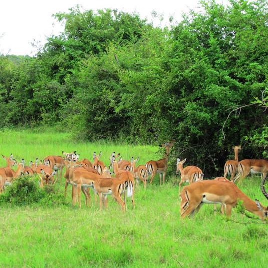 Lake-Mburo-National-Park2.jpg