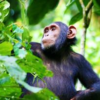 Kibale-Forest-National-Park1.jpg