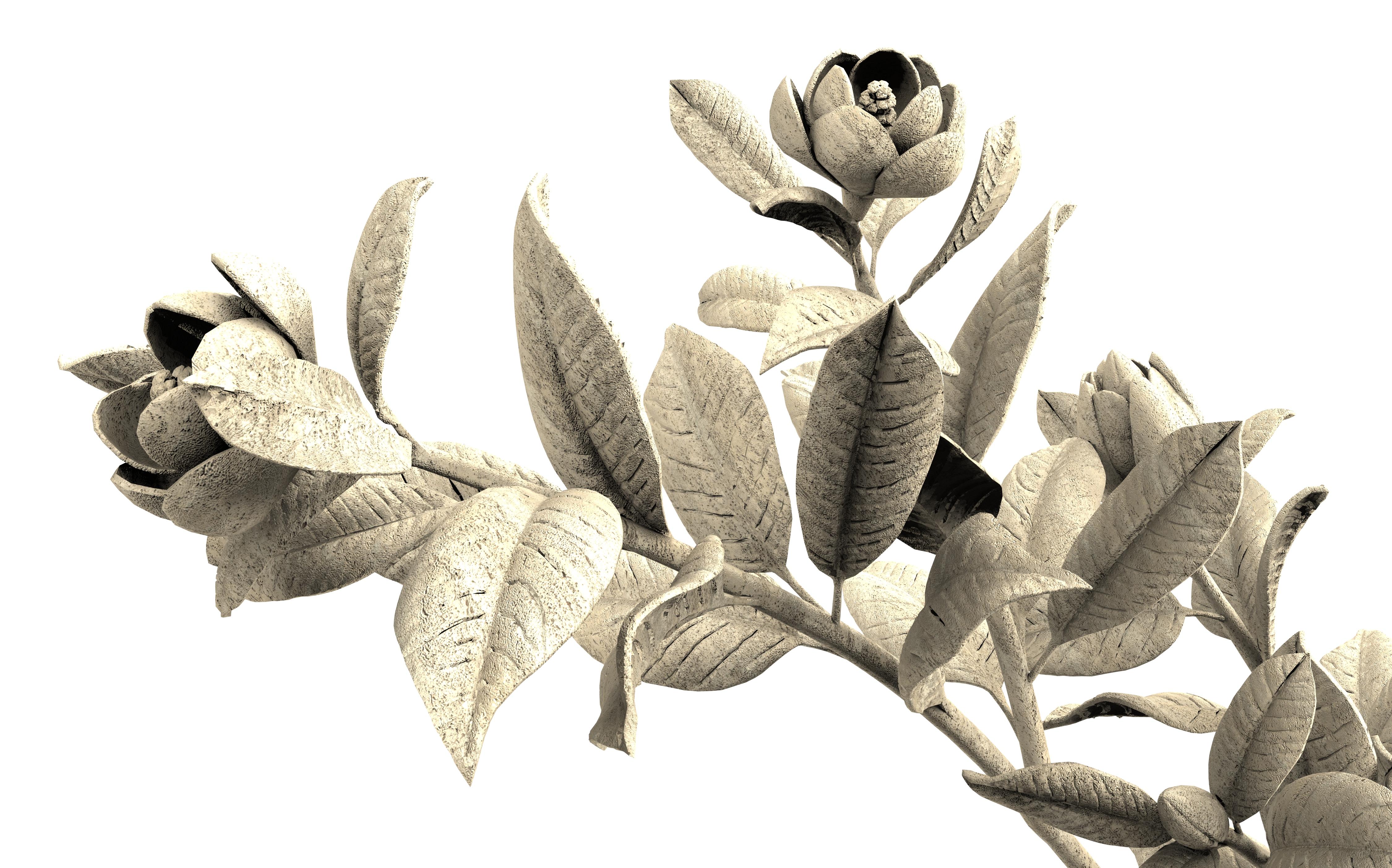 magnolia 2m det.685s.jpg