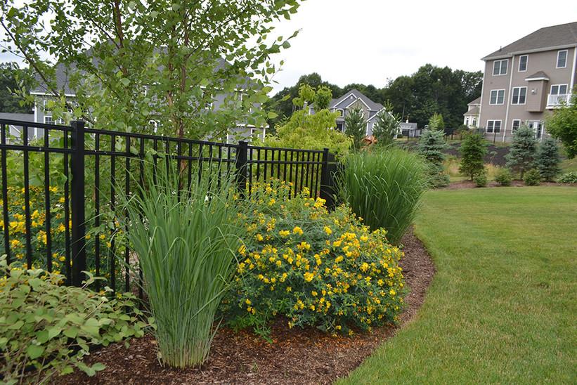 Grasses and Perennials along ornamental