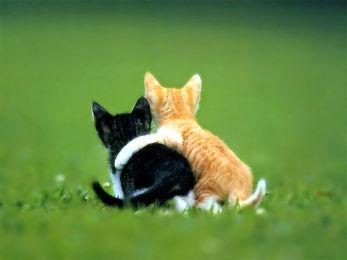 chats amis.jpg