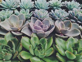 Succulents 3_edited.jpg