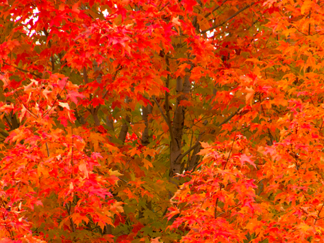 9 Trees and Shrubs that Change Color for Fall