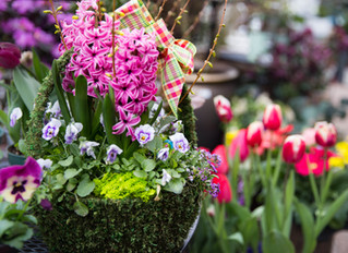 Ten Tips for Creating a Colorful Spring Container