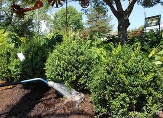 Watering Your Trees and Shrubs Through the Hot Summer Months
