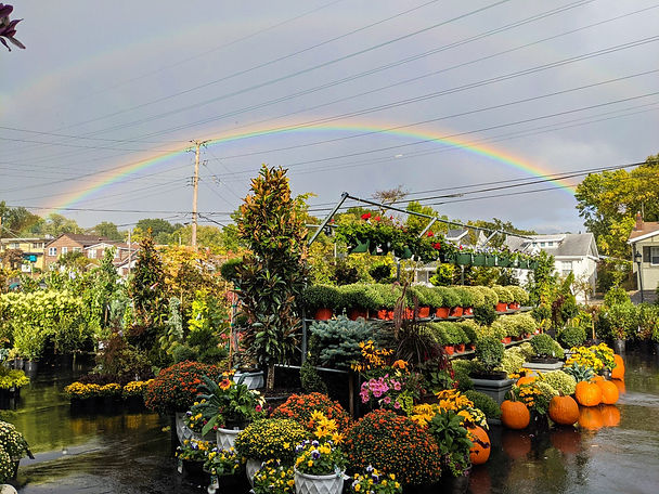 Rainbow Outside of Store Edited- BEST.jpg