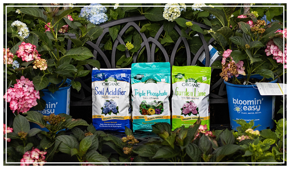 Change the color of hydrangea blooms with soil acidifier, garden lime, or triple phosphate fertilizer.