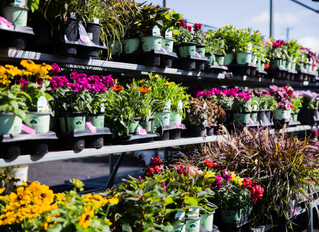 Our Favorite Fall Annuals and Fillers!