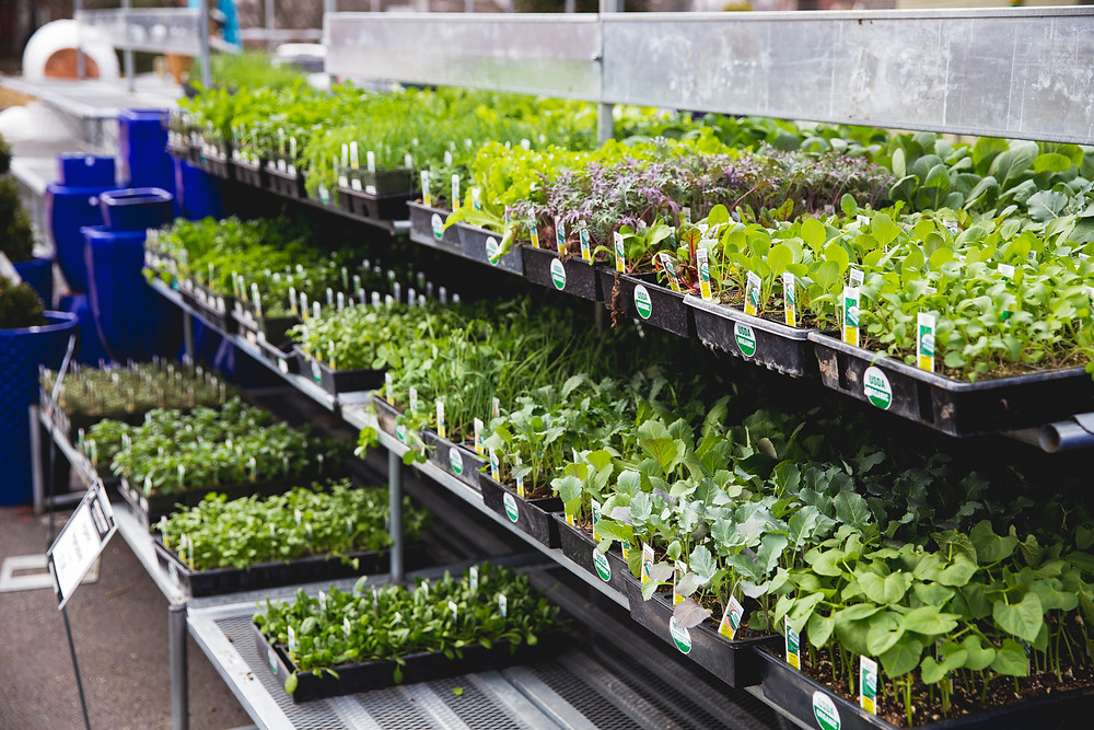 Vegetables and herbs for your raised bed garden are available nowat Garden Heights Nursery in St. Louis!