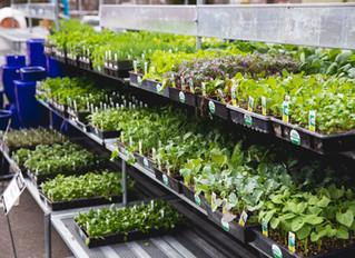 7 Vegetable Gardening Tips for Beginners
