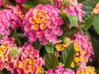 What's the Difference Between Perennial and Annual Plants?